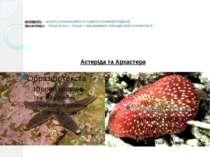 Астеріди − можуть розмножуватися поділом променів (рідкісні) Архастери − тіль...
