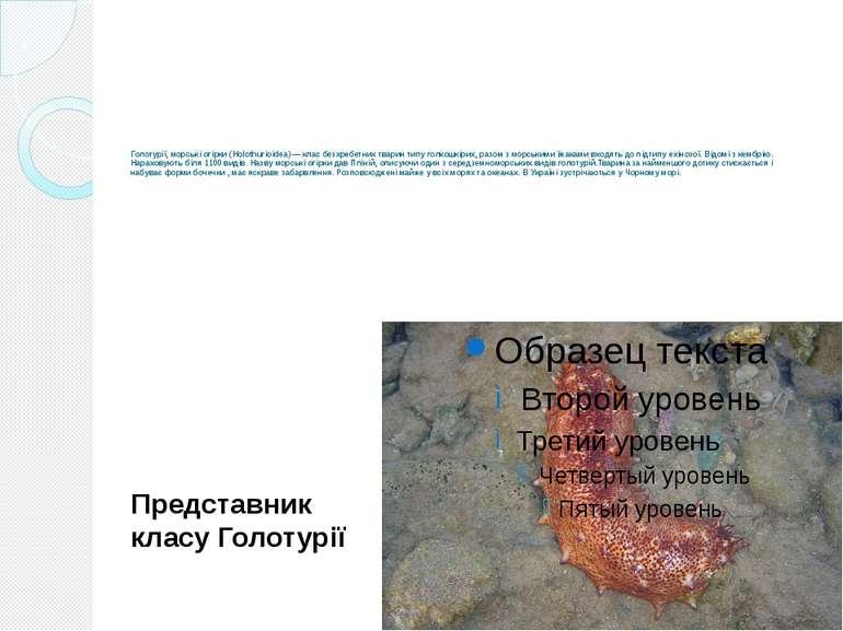 Голотурії, морські огірки (Holothurioidea)— клас безхребетних тварин типу го...