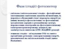 Фази (стадії) фотосинтезу світлова (світлозалежна) стадія – фотофізичні (погл...