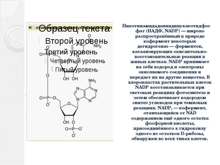 Никотинамидадениндинуклеотидфосфат (НАДФ, NADP) — широко распространённый в п...