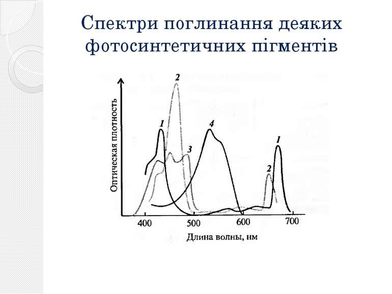Спектри поглинання деяких фотосинтетичних пігментів