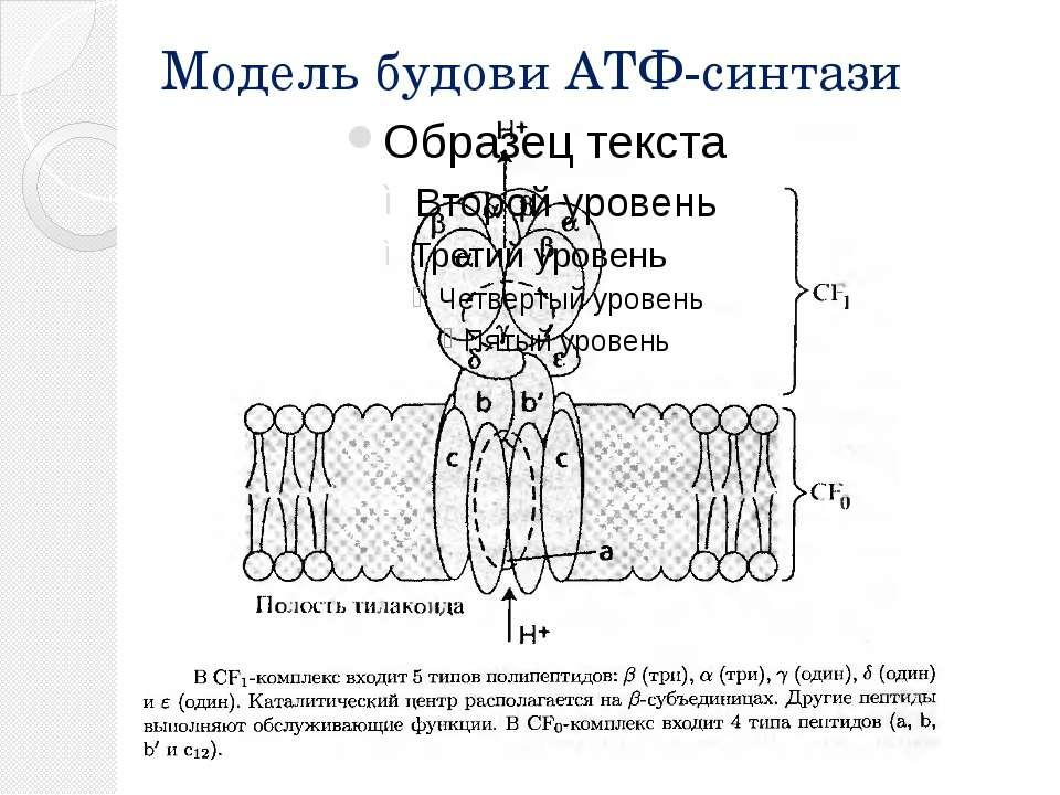 Модель будови АТФ-синтази