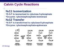 Calvin Cycle Reactions №11 Isomerization R-5-P is isomerized to rybulose-5-ph...