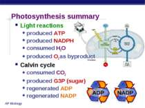 Photosynthesis summary Light reactions produced ATP produced NADPH consumed H...