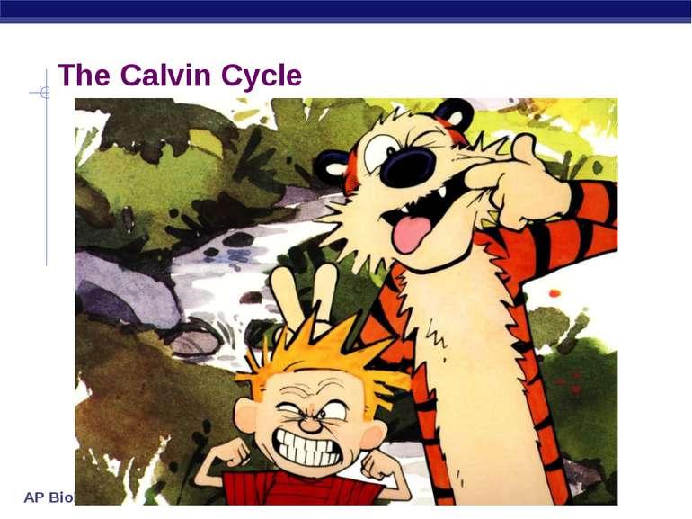 The Calvin Cycle AP Biology