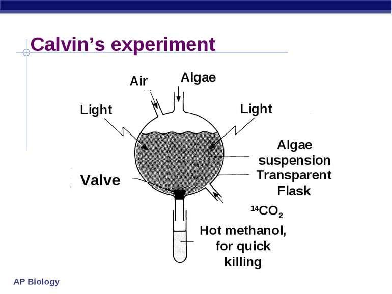 Calvin's experiment Air Light Light Valve Algae Algae suspension Transparent ...