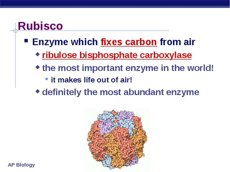 Rubisco Enzyme which fixes carbon from air ribulose bisphosphate carboxylase ...