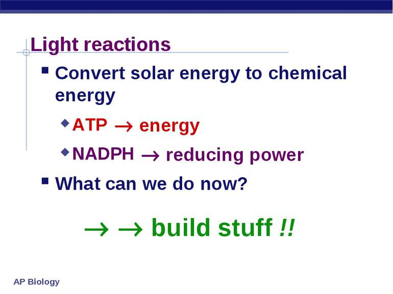 Light reactions Convert solar energy to chemical energy ATP NADPH What can we...