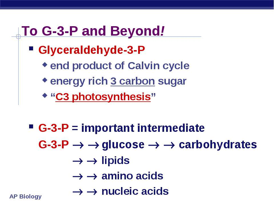 To G-3-P and Beyond! Glyceraldehyde-3-P end product of Calvin cycle energy ri...