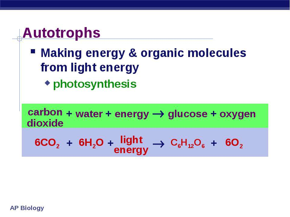 Autotrophs Making energy & organic molecules from light energy photosynthesis...