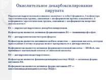 Окислительное декарбоксилирование пирувата Пируватдегидрогеназный комплекс вк...