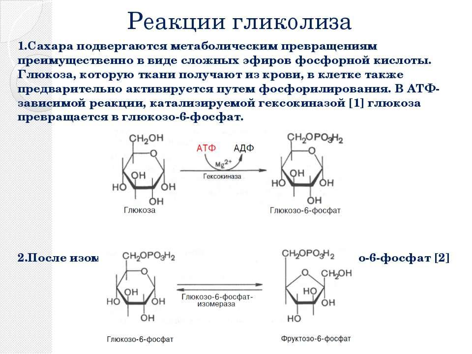 Реакции гликолиза 1.Сахара подвергаются метаболическим превращениям преимущес...