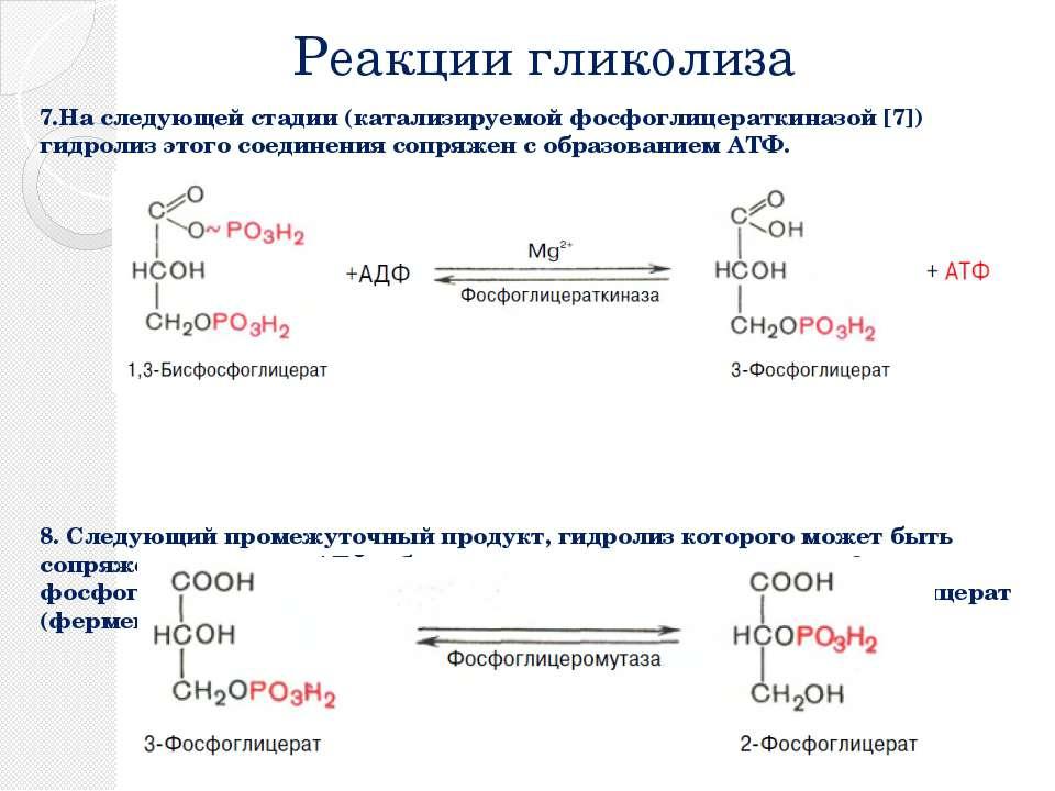 Реакции гликолиза 7.На следующей стадии (катализируемой фосфоглицераткиназой ...