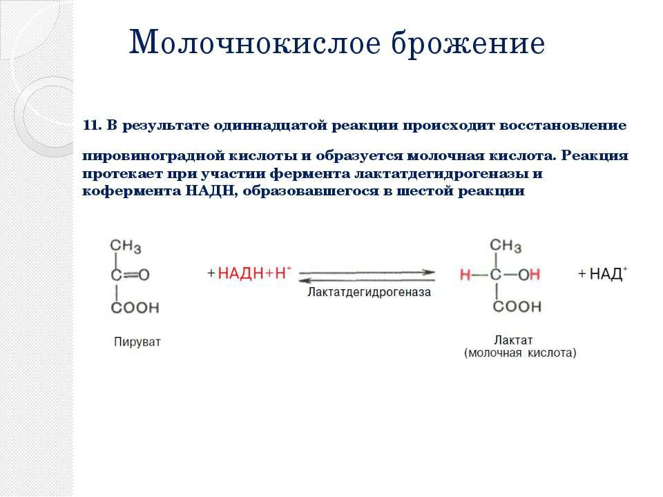 Молочнокислое брожение 11. В результате одиннадцатой реакции происходит восст...