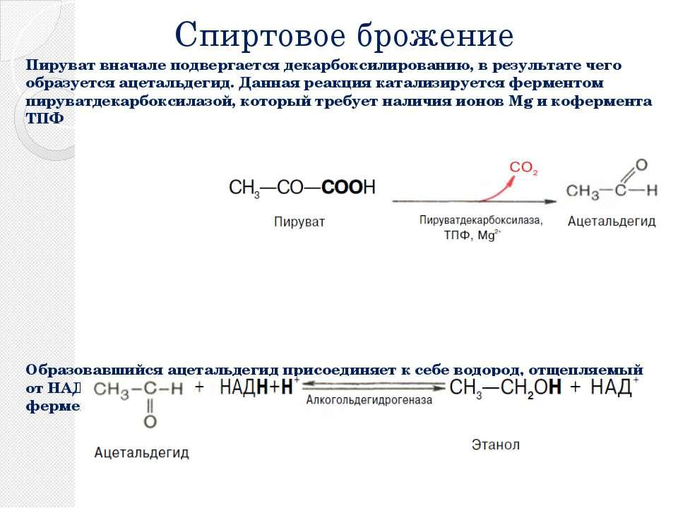 Спиртовое брожение Пируват вначале подвергается декарбоксилированию, в резуль...