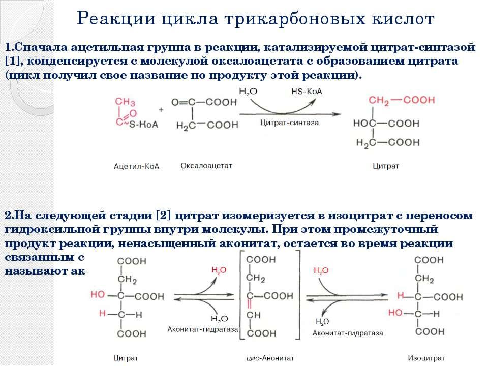 Реакции цикла трикарбоновых кислот 1.Сначала ацетильная группа в реакции, кат...