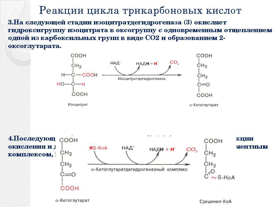 Реакции цикла трикарбоновых кислот 3.На следующей стадии изоцитратдегидрогена...
