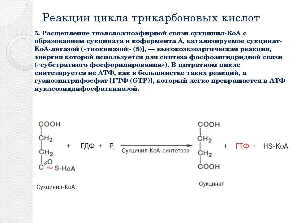 Реакции цикла трикарбоновых кислот 5. Расщепление тиолсложноэфирной связи сук...