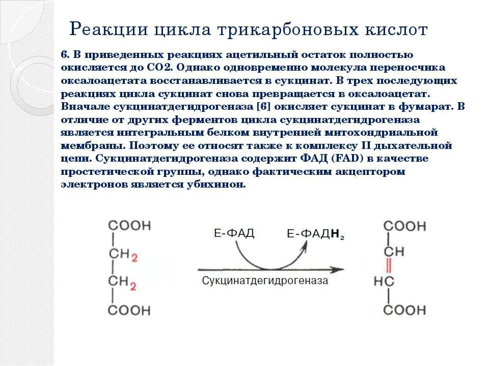 Реакции цикла трикарбоновых кислот 6. В приведенных реакциях ацетильный остат...