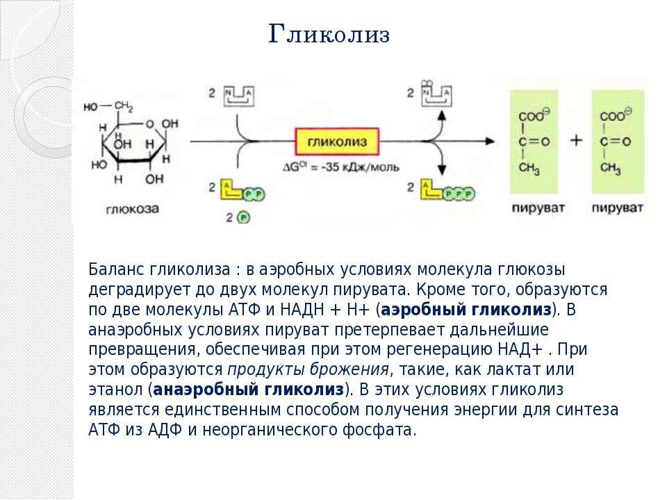 Гликолиз Баланс гликолиза : в аэробных условиях молекула глюкозы деградирует ...