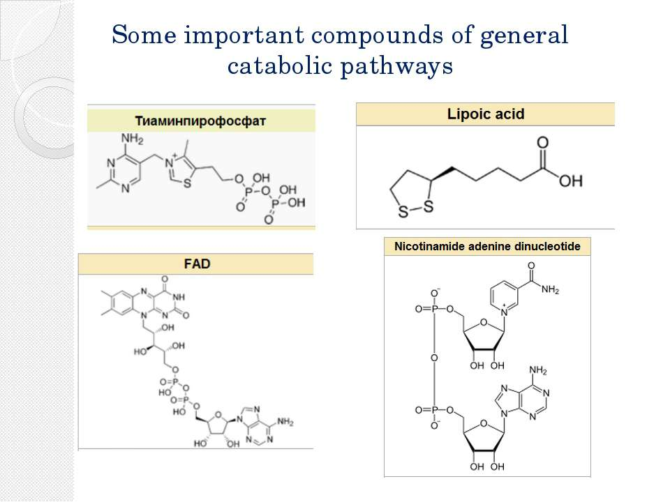 Some important compounds of general catabolic pathways