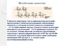 Метаболизм гликогена Гликоген животных, как и амилопектин растений, представл...