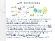 Анаболизм гликогена Гликоген печени никогда не расщепляется полностью. Как пр...