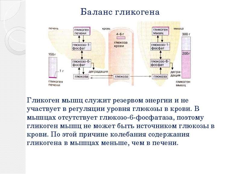 Баланс гликогена Гликоген мышц служит резервом энергии и не участвует в регул...