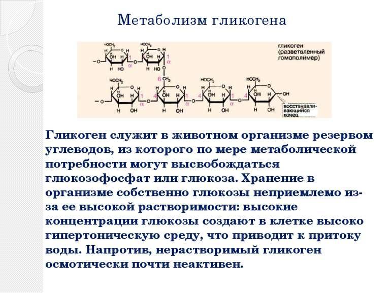 Метаболизм гликогена Гликоген служит в животном организме резервом углеводов,...