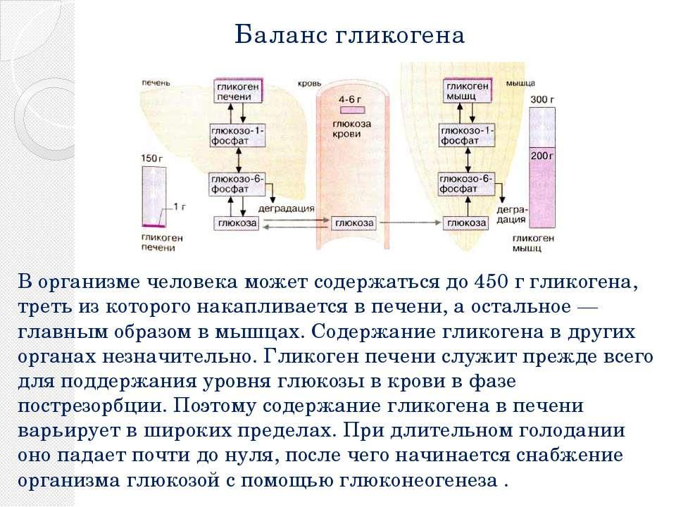 Баланс гликогена В организме человека может содержаться до 450 г гликогена, т...