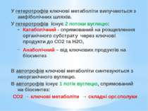У гетеротрофів ключові метаболіти вилучаються з амфіболічних шляхів. У гетеро...