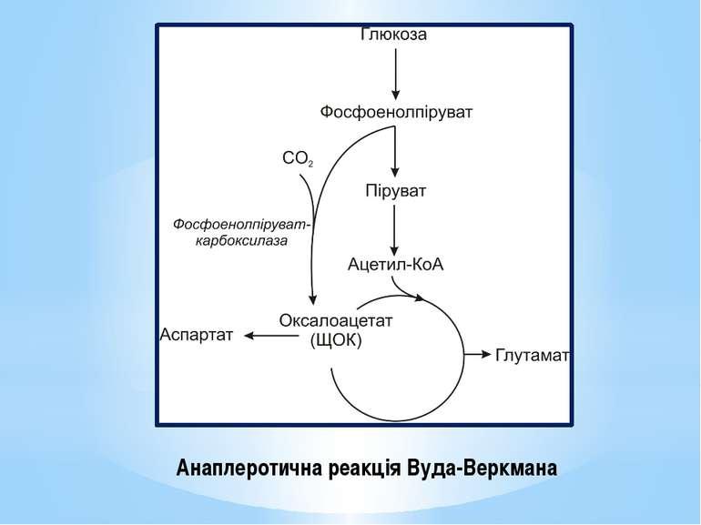 Анаплеротична реакція Вуда-Веркмана