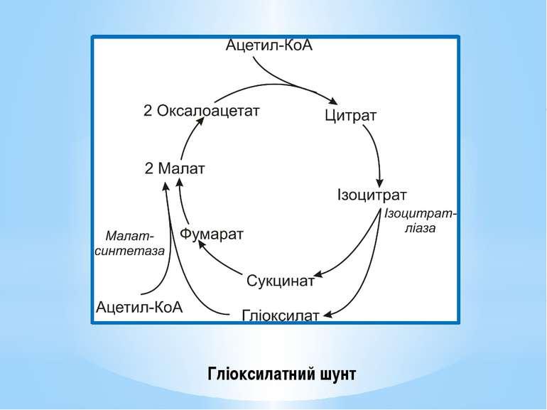 Гліоксилатний шунт
