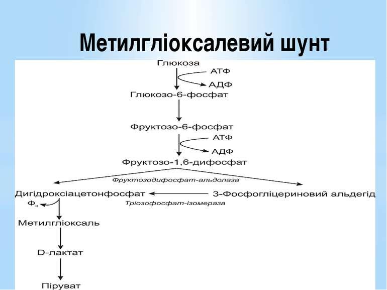 Метилгліоксалевий шунт