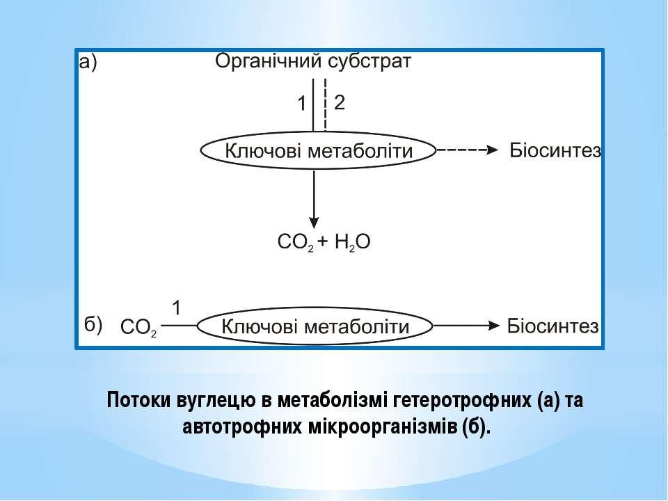 Потоки вуглецю в метаболізмі гетеротрофних (а) та автотрофних мікроорганізмів...