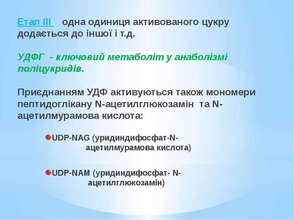 Етап ІІІ одна одиниця активованого цукру додається до іншої і т.д. УДФГ - клю...