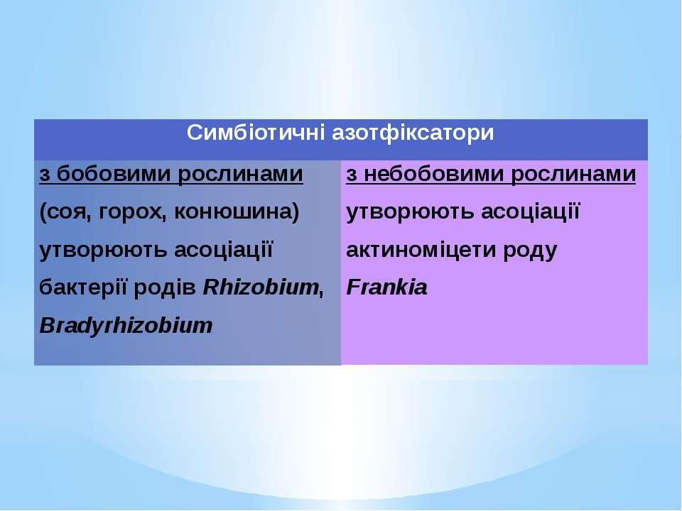 Симбіотичніазотфіксатори з бобовими рослинами(соя, горох, конюшина) утворюють...