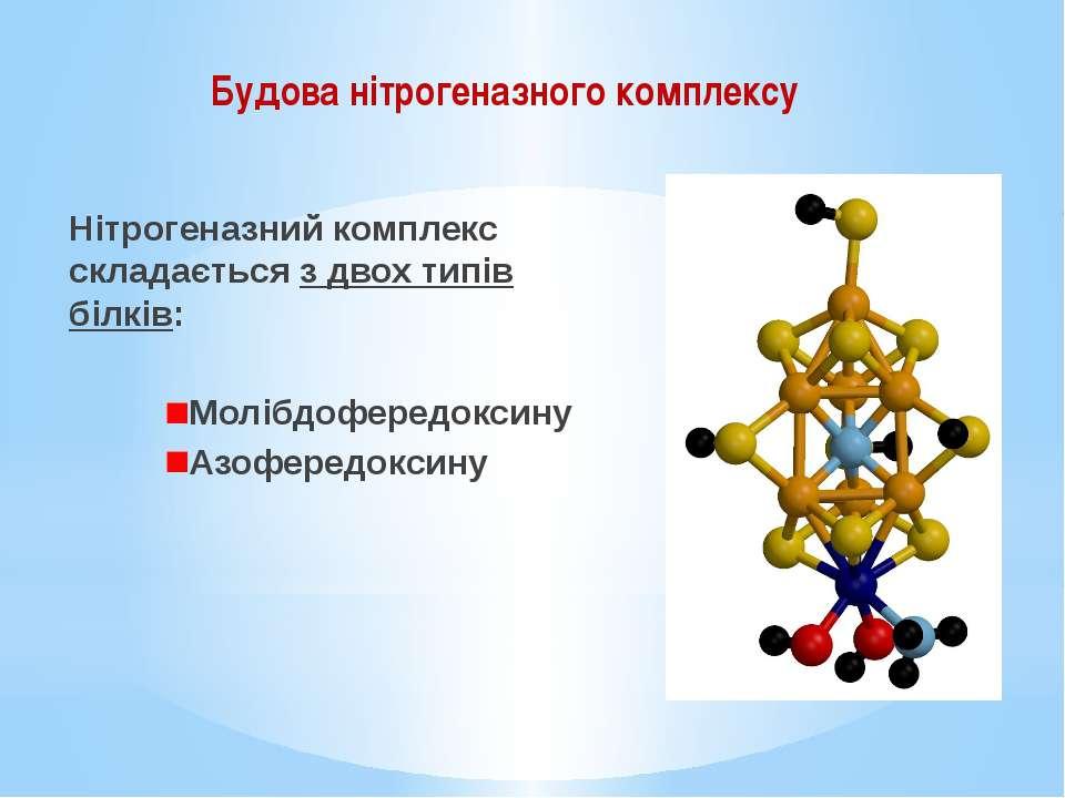 Нітрогеназний комплекс складається з двох типів білків: Молібдофередоксину Аз...