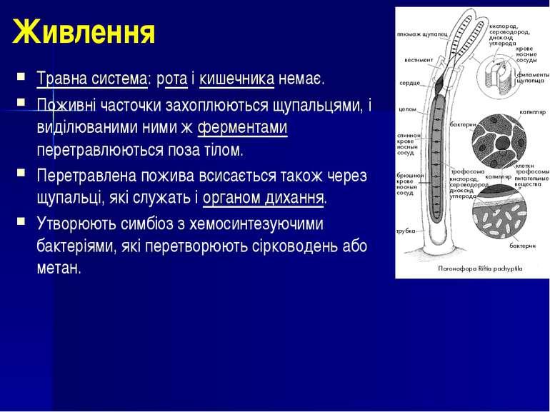 Живлення Травна система: рота і кишечника немає. Поживні часточки захоплюютьс...
