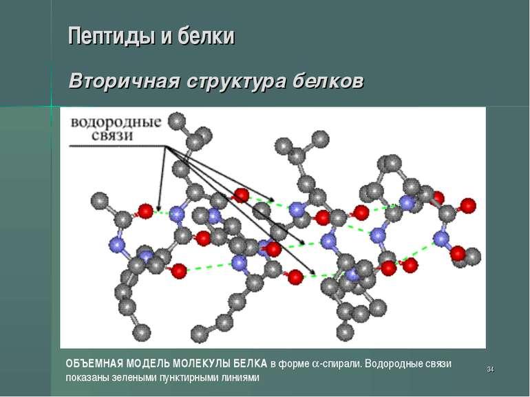 * Пептиды и белки Вторичная структура белков ОБЪЕМНАЯ МОДЕЛЬ МОЛЕКУЛЫ БЕЛКА в...