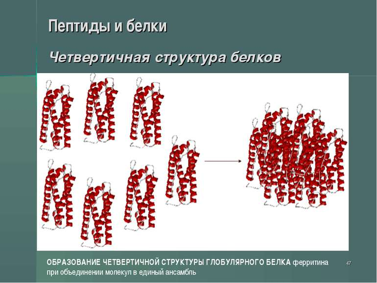 * Пептиды и белки Четвертичная структура белков ОБРАЗОВАНИЕ ЧЕТВЕРТИЧНОЙ СТРУ...