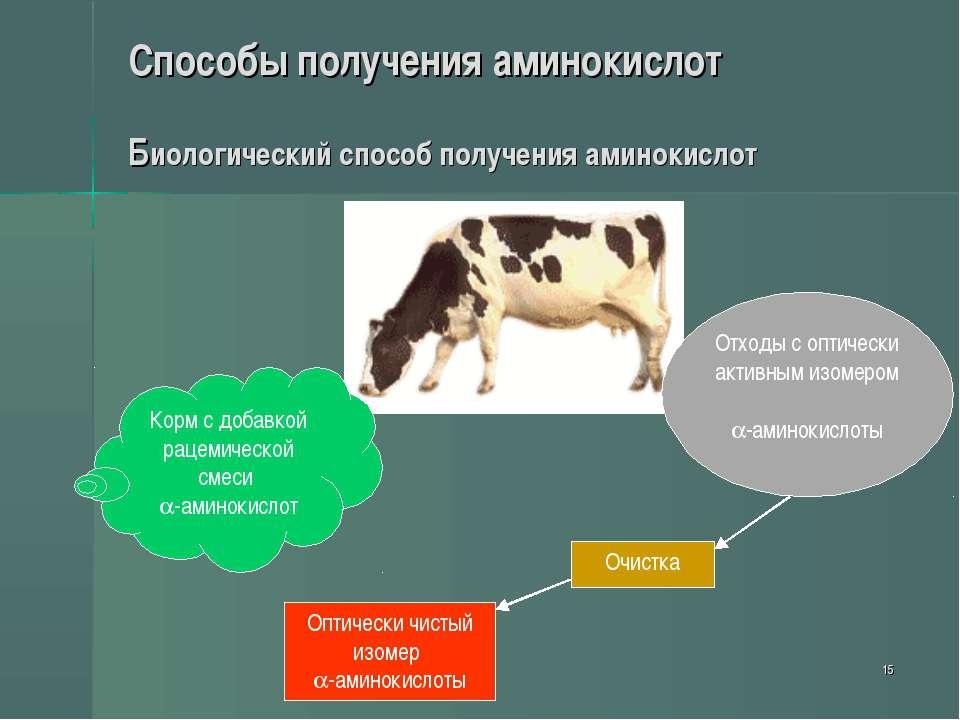 * Способы получения аминокислот Биологический способ получения аминокислот Ко...
