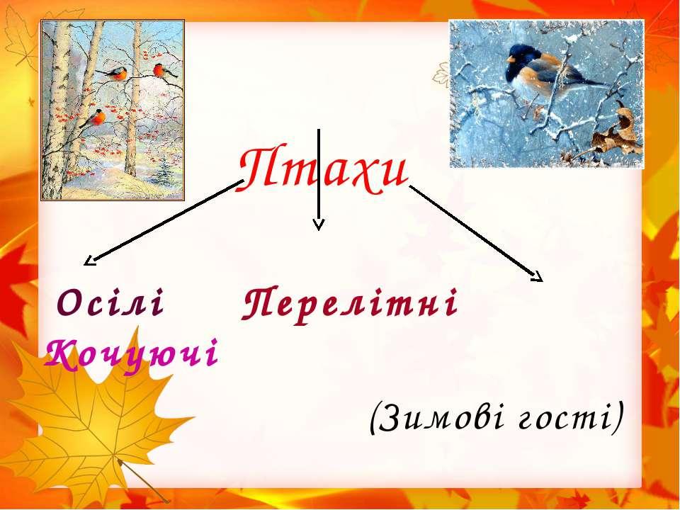 Птахи Осілі Перелітні Кочуючі (Зимові гості)