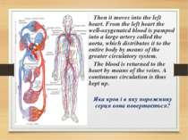 Then it moves into the left heart. From the left heart the well-oxygenated bl...