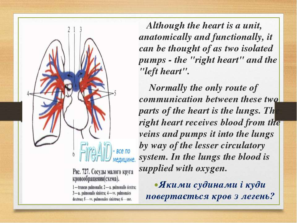 Although the heart is a unit, anatomically and functionally, it can be though...