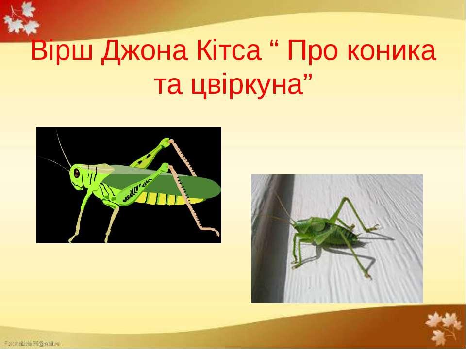 цвіркуни картинки