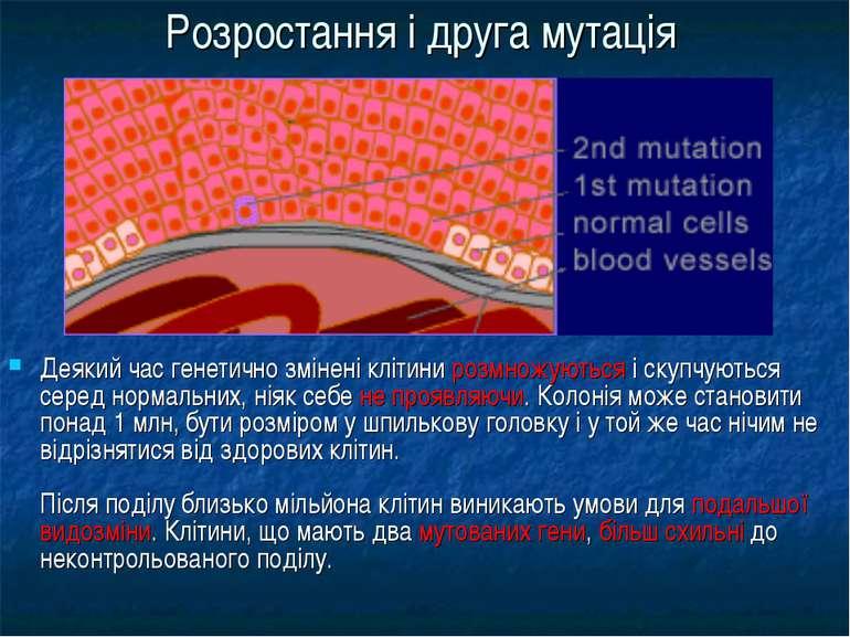 Розростання і друга мутація Деякий час генетично змінені клітини розмножуютьс...