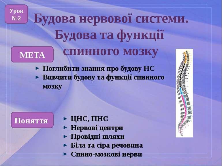 Будова нервової системи. Будова та функції спинного мозку МЕТА Поглибити знан...
