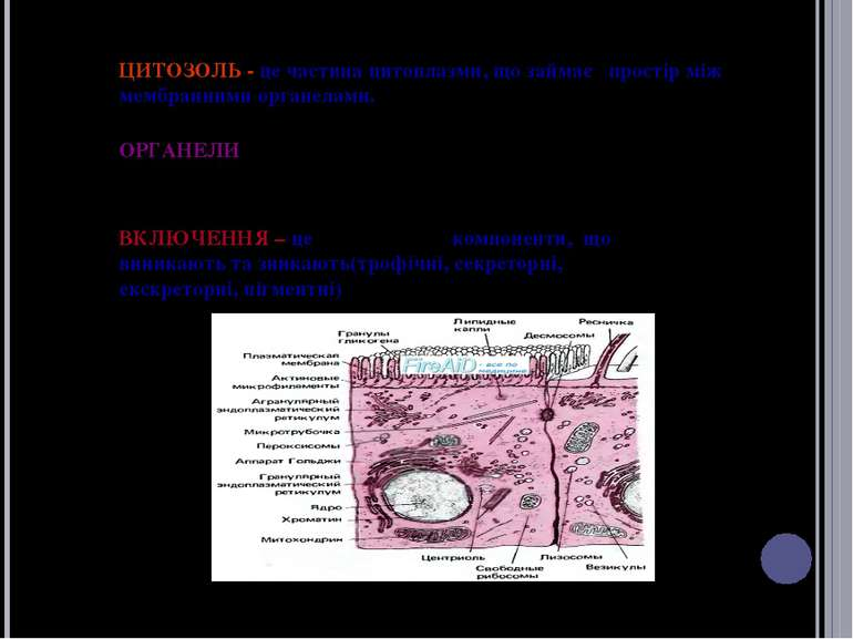 ЦИТОЗОЛЬ - це частина цитоплазми, що займає простір між мембранними органелам...