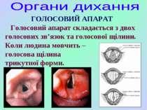 ГОЛОСОВИЙ АПАРАТ Голосовий апарат складається з двох голосових зв'язок та гол...
